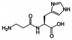 molécule carnosine copy